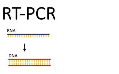 RT-PCR KORONAVİRÜS TESTİ İLE İLGİLİ TÜM HUSUSLAR